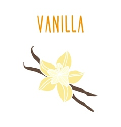 Vanilla beans vector