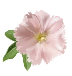 Pink mallow flower vector