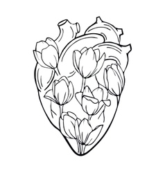 The human heart with tulips INSIDE vector image vector image