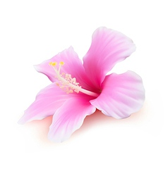 Hibiscus flower blossom vector