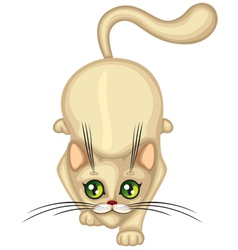 Cute Kitten hunts vector image