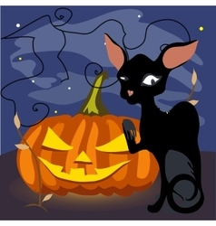 Black cat with a grinning pumpkin vector