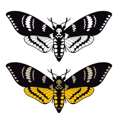 Deaths head hawk moth vector