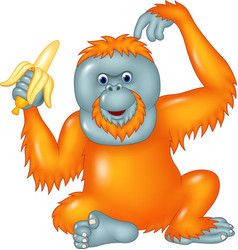 Cartoon funny orangutan eating banana isolated vector
