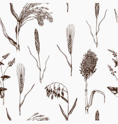 pattern with hand drawn cereal crops vector image