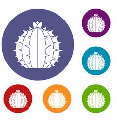 Lophophora cactus icons set vector