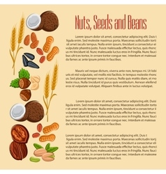 Nuts seeds and beans banner vector