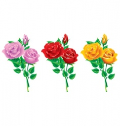 set of bouquets of roses vector image vector image