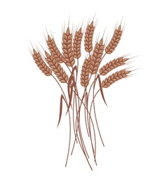 Wheat vector