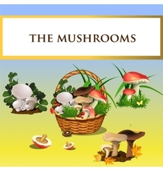 Forest mushrooms and basket with mushrooms vector image