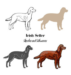 irish setter dogs sketches vector image