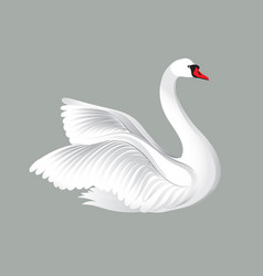 white bird isolated over white background swans vector image vector image