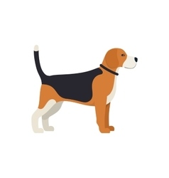Beagle Dog - color serious dog Beagle breed vector image vector image