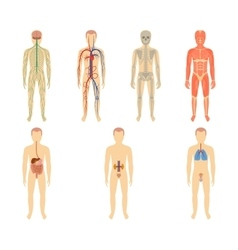 Set of human organs and systems vector