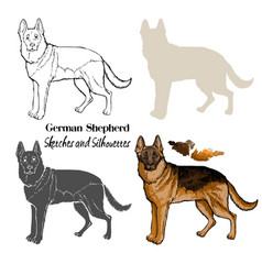 german shepherd dogs sketches vector image
