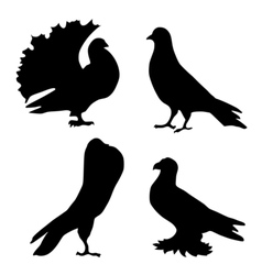 silhouette of pigeons vector image