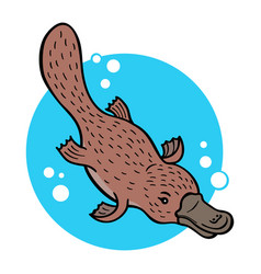 cartoon platypus vector image