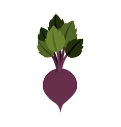 Silhouette colorful with beet vegetable vector