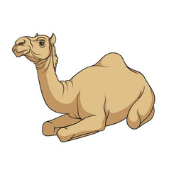 Color image of a camel vector