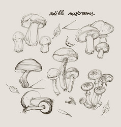 hand drawing a set of mushrooms vector image vector image