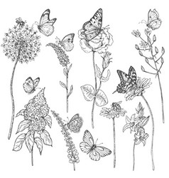 Wildflowers and insects sketch vector
