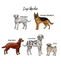 Hand drawn dogs sketches vector