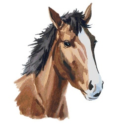 Horse head watercolor vector