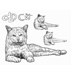 Old cat vector