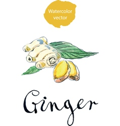 Ginger vector
