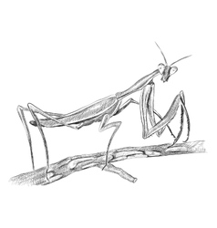 grasshopper sitting on tree side view vector image