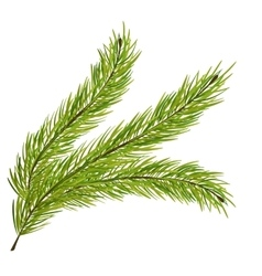 Fir Branch Isolated on White Background vector image vector image