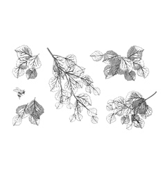 Tree branch leaves set vector image