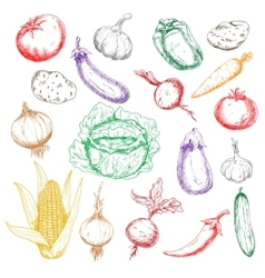 Sketched wholesome fresh vegetables icons vector image