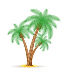 Palm tree 24 vector