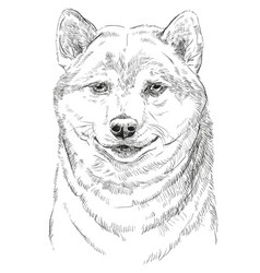 shiba inu portrait vector image vector image