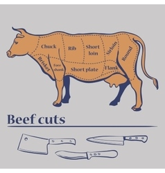 Cuts of cow vector