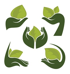 hands and leaves vector image