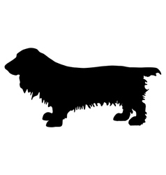 field spaniel silhouette vector image vector image