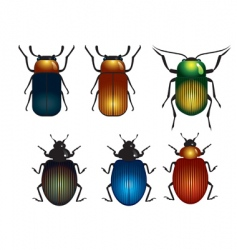 timber beetle vector image