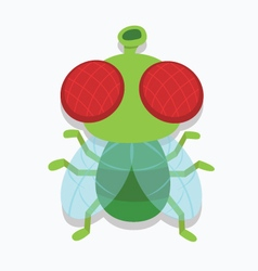 housefly insect top cartoon vector image