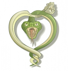 snake love vector image vector image