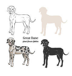 Great dane dogs sketches vector