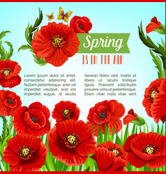 Greeting poster of spring poppy flowers vector