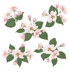 Apple tree flowers and green leaves set vector image vector image