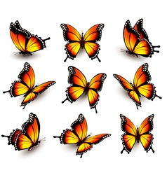 Beautiful orange butterfly in different positions vector