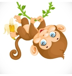 Cute baby monkey with banana hanging on the vine vector