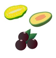 Jackfruit feijoa and acai isolated on white vector