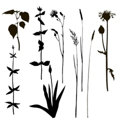Silhouettes of herbs and flowers vector