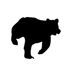 Bear black silhouette vector image