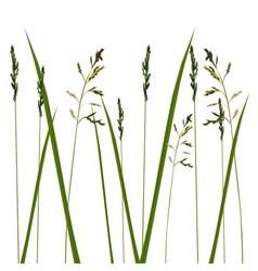 Allergy grass pollen isolated vector
